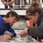 Marie siziert einen Fischkopf im Wahlpflichtfach Meeresbiologie