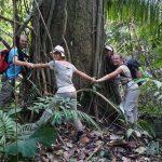 Wer ist groesser - Kusis oder ein Regenwaldbaum