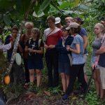 Stolz werden uns die vielen reifen Kakaofruechte praesentiert