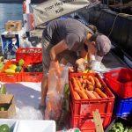 frisches Obst und Gemüse sortieren