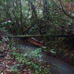 Expi-Gruppe Grand Etang National Park (rainforest) II