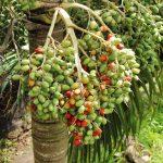 Christmasfruit