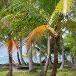 Palmen der Gefegten Insel
