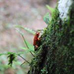 Ein kleiner Urwaldbewohner