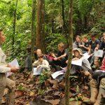 Kiras Referat im und über den tropischen Regenwald