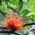 Die Flora und Fauna des Regenwaldes