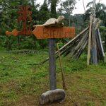 Schildkröten wo man hinschaut