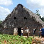 Ein Tabak-Trockenhaus im Vinales-Tal