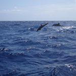 Wieder auf See mit Kurs auf die Bermudas haben wir Begleiter