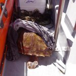 Die Schildkröte wird später markiert und wieder freigelassen