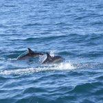 Die ersten Delfine tauchen auf