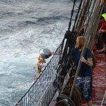 Auf dem Atlantik dürfen wir Biomüll über Bord geben