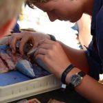Im Wahlpflichtfach Meeresbiologie hatten viele Kusis die Chance, Fische zu sezieren