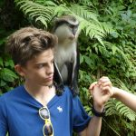 Auch Affen kamen den Kusis über den Weg