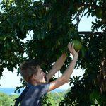 Die Kusis haben alle möglichen exotische Früchte entdeckt