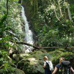 Kleingruppenexkursionen durch den Regenwald