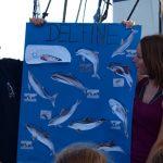 Delfinreferat in der Biskaya