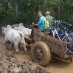 Trampen mit den Fahrrädern auf kubanische Art...