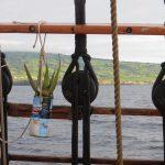 Bordgrün vor Inselgrün