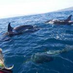 Die Orcas zeigten keine Scheu