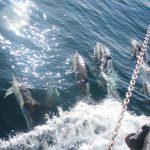 Delphine am Vorschiff!