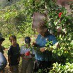 Tropische Pflanzenkunde mit Miguel