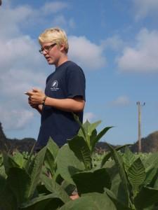 Auf der Tabakplantage